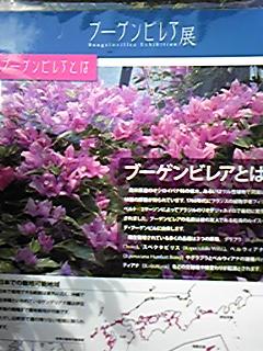 DVC00318.JPG